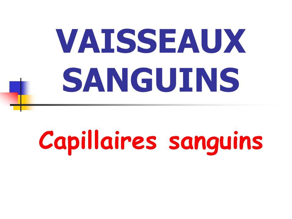 VAISSEAUX SANGUINS Capillaires sanguins