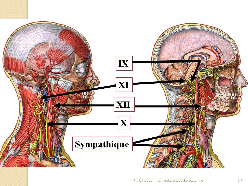 IX XII X XI Sympathique 01/04/2008 Dr. ABDALLAH- Pharynx