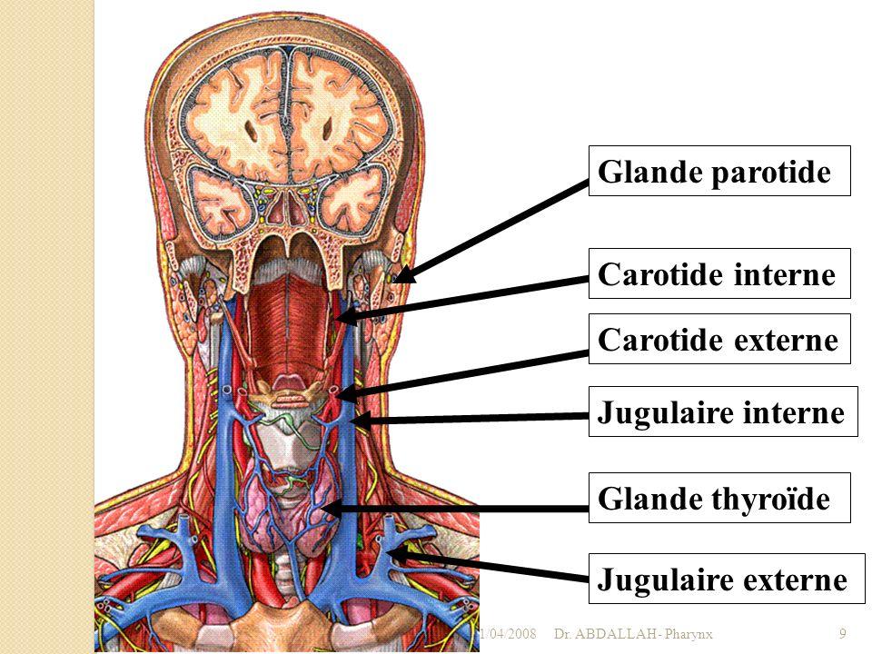 Glande parotide Carotide interne Carotide externe Jugulaire interne