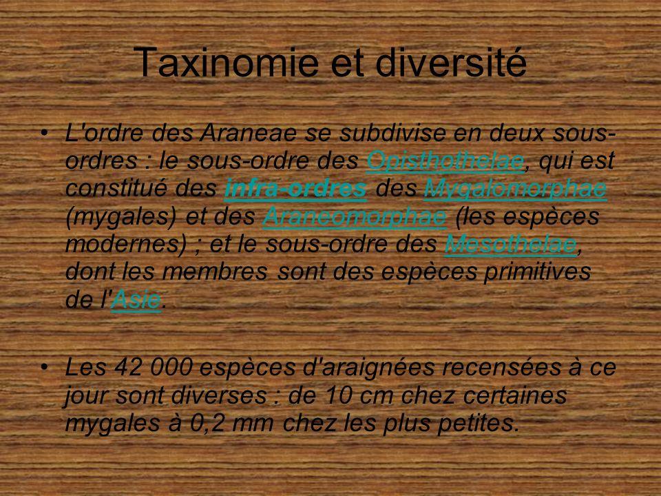 Taxinomie et diversité