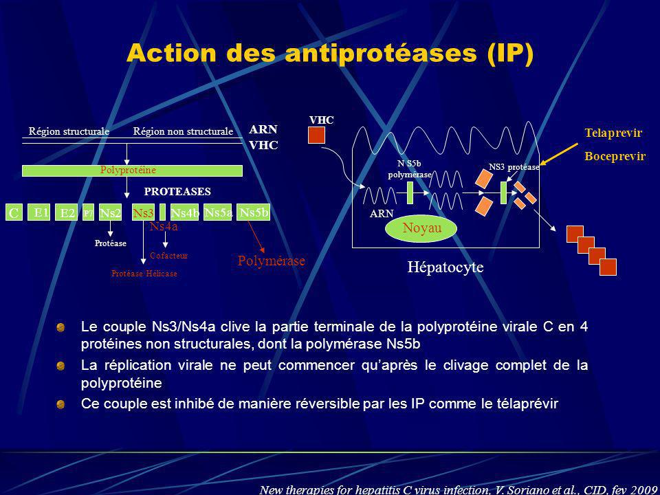 Action des antiprotéases (IP)