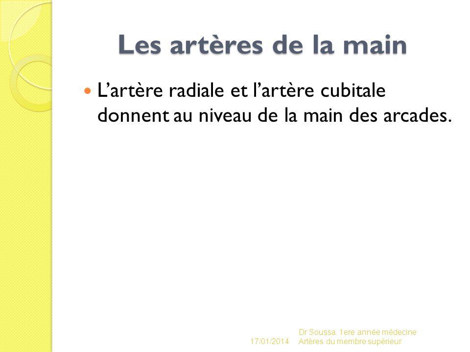 Les artères de la main L'artère radiale et l'artère cubitale donnent au niveau de la main des arcades.