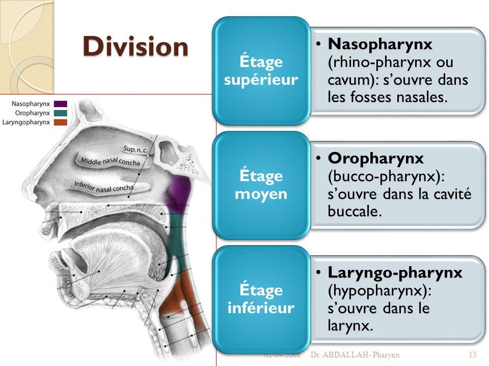 Division 01/04/2008 Dr. ABDALLAH- Pharynx Étage supérieur