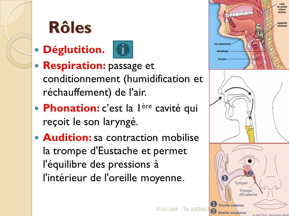 Rôles Déglutition. Respiration: passage et conditionnement (humidification et réchauffement) de l'air.