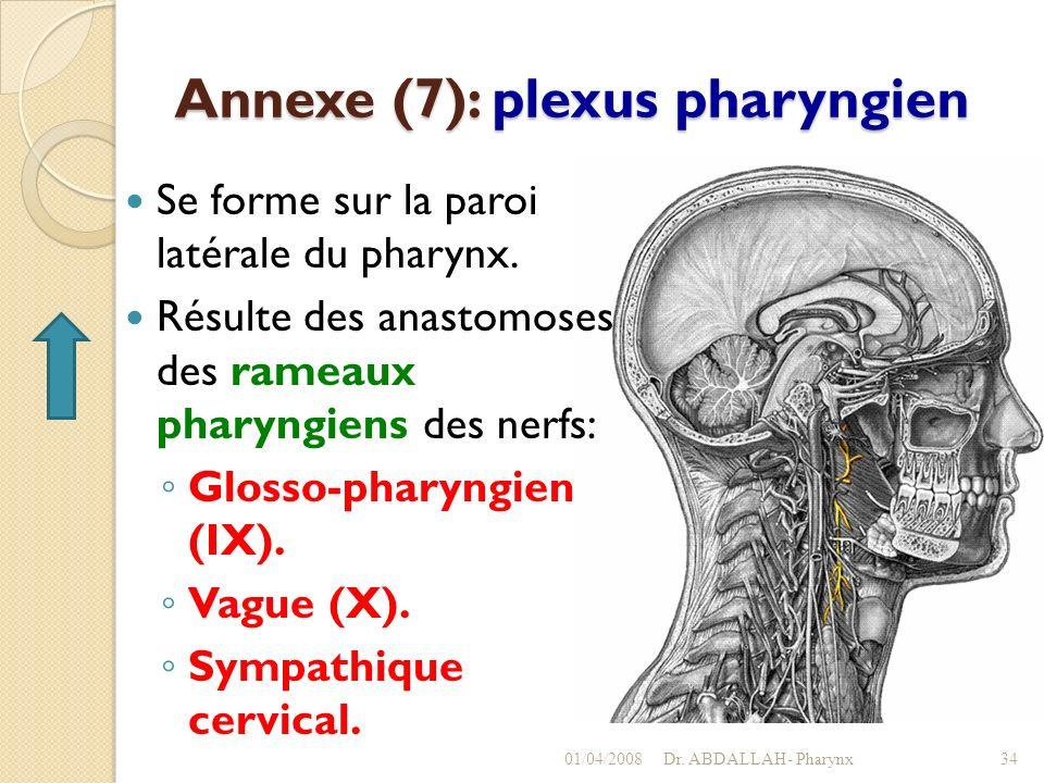 Annexe (7): plexus pharyngien