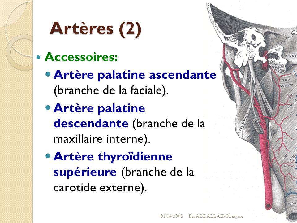 Artères (2) Accessoires: