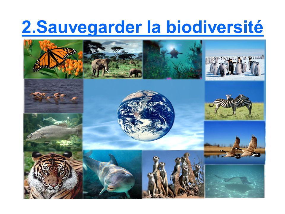 2.Sauvegarder la biodiversité