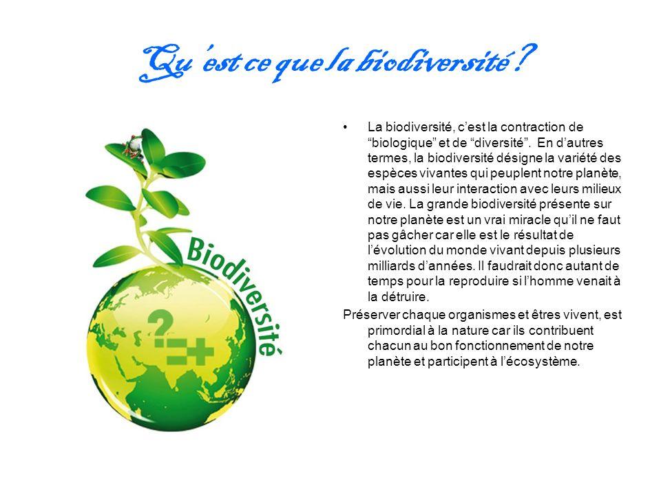 Qu'est ce que la biodiversité