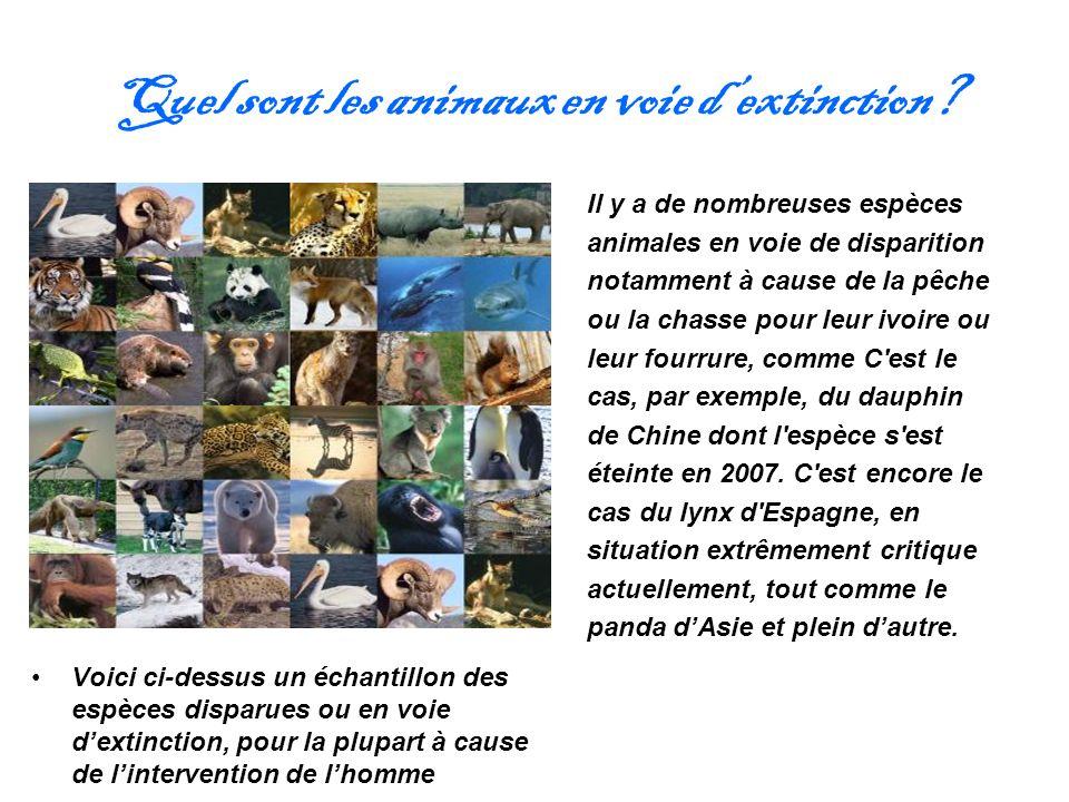 Quel sont les animaux en voie d'extinction