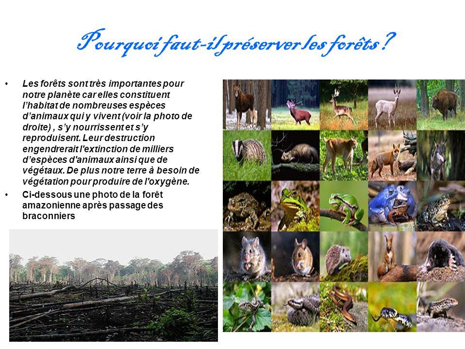 Pourquoi faut-il préserver les forêts