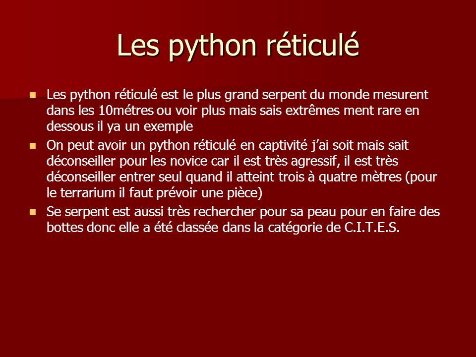 Les python réticulé