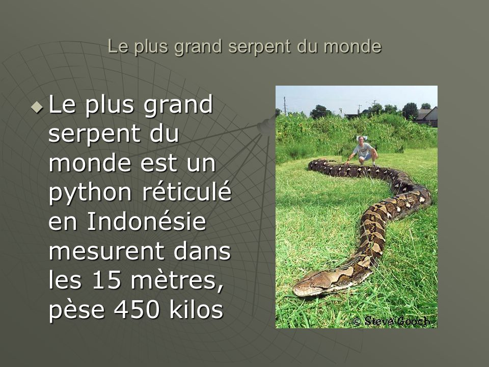 Le plus grand serpent du monde