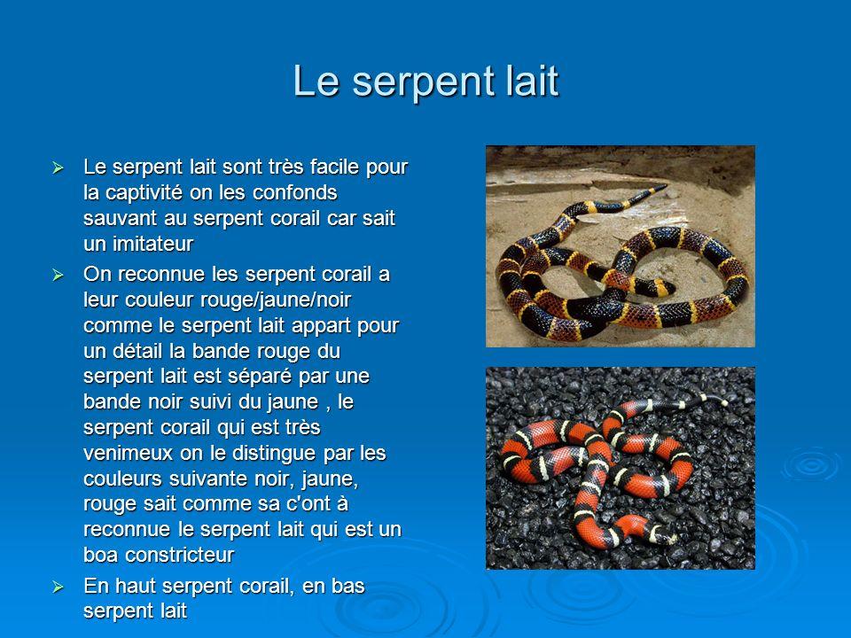 Le serpent lait Le serpent lait sont très facile pour la captivité on les confonds sauvant au serpent corail car sait un imitateur.
