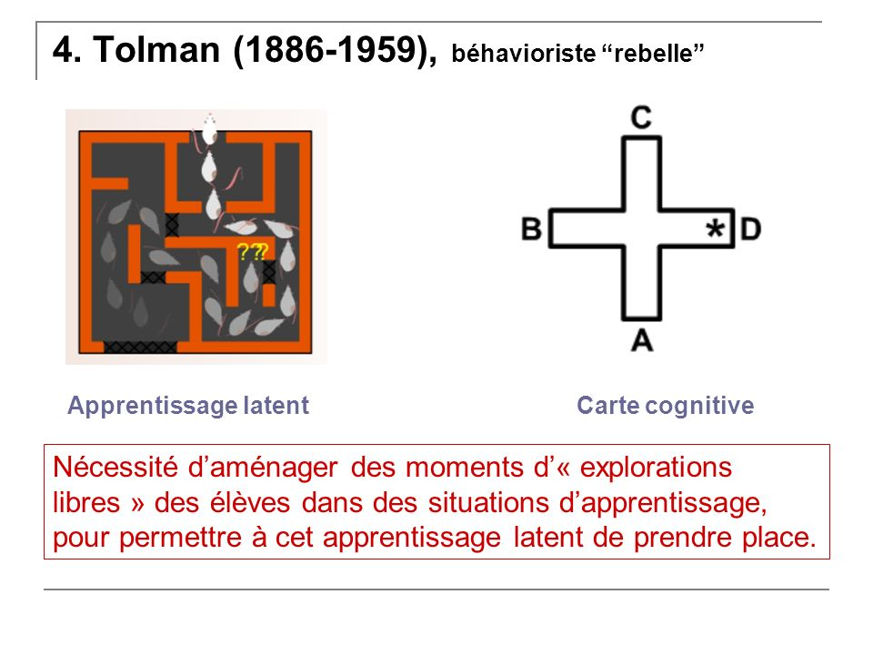 4. Tolman ( ), béhavioriste rebelle