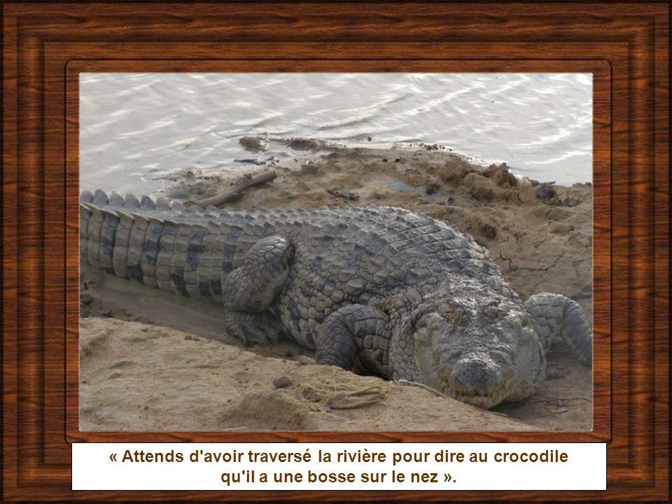 « Attends d avoir traversé la rivière pour dire au crocodile
