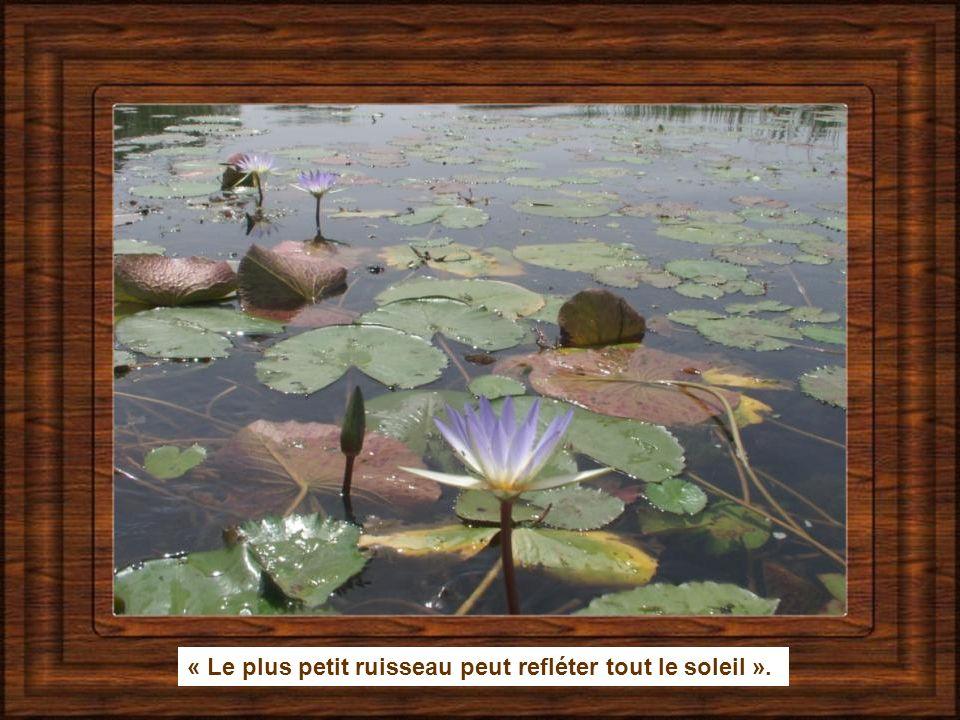 « Le plus petit ruisseau peut refléter tout le soleil ».