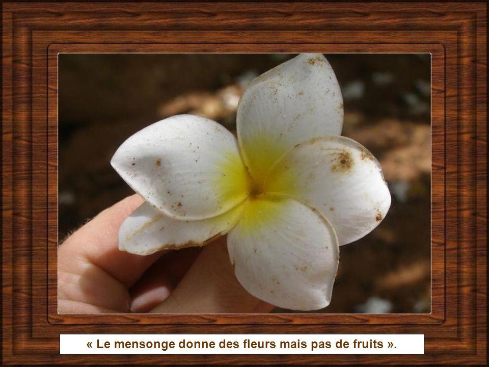 « Le mensonge donne des fleurs mais pas de fruits ».