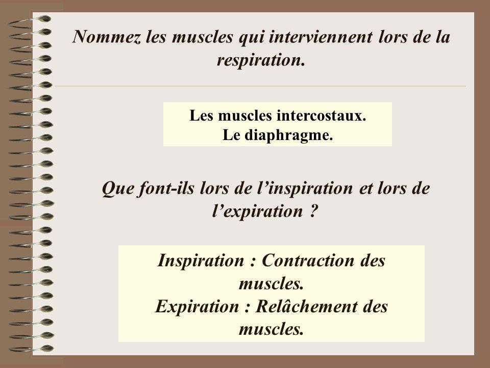 Nommez les muscles qui interviennent lors de la respiration.