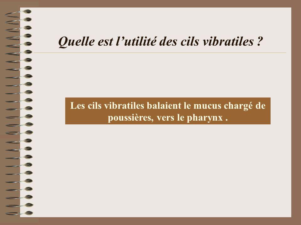 Quelle est l'utilité des cils vibratiles