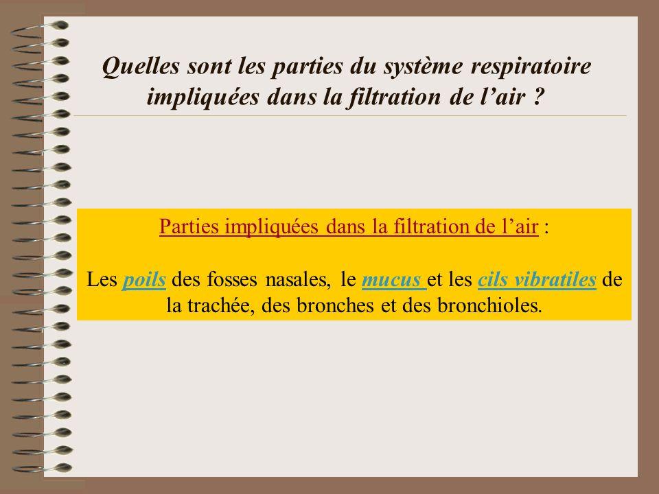 Parties impliquées dans la filtration de l'air :