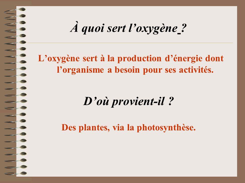 Des plantes, via la photosynthèse.