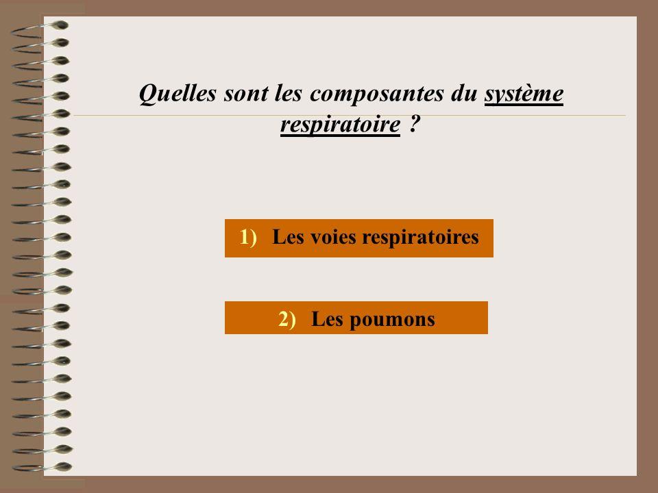 Quelles sont les composantes du système respiratoire