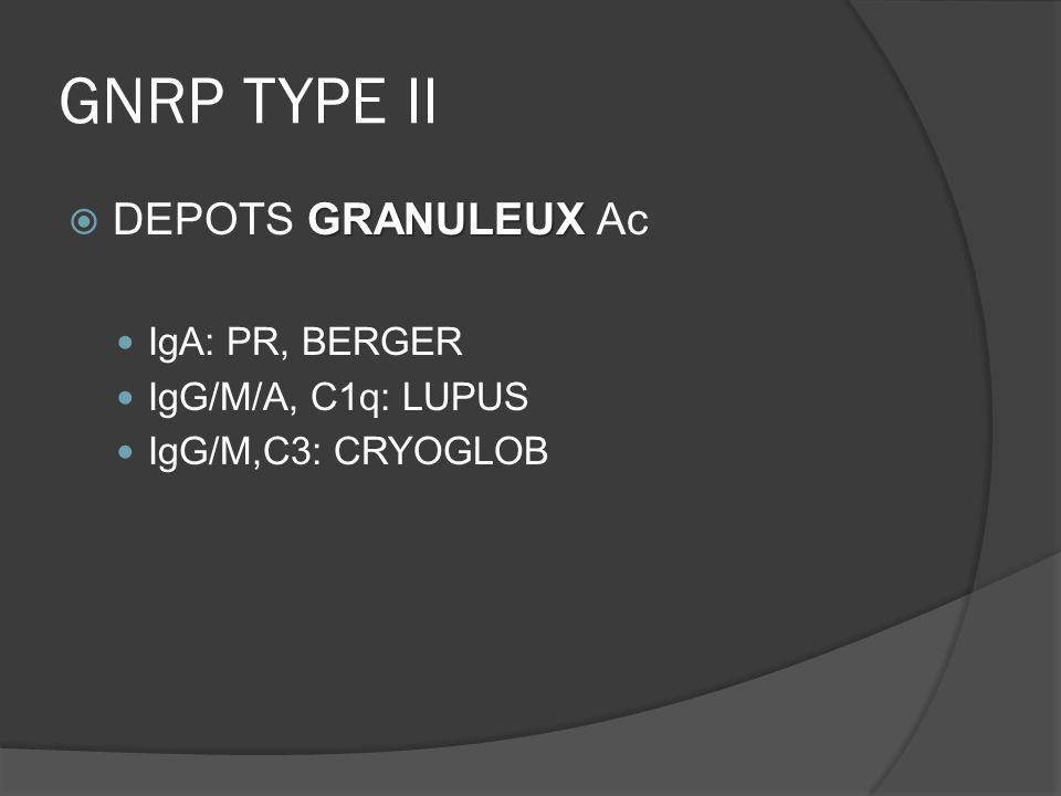GNRP TYPE II DEPOTS GRANULEUX Ac IgA: PR, BERGER IgG/M/A, C1q: LUPUS