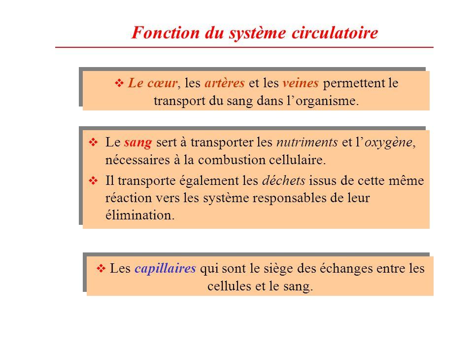 Fonction du système circulatoire