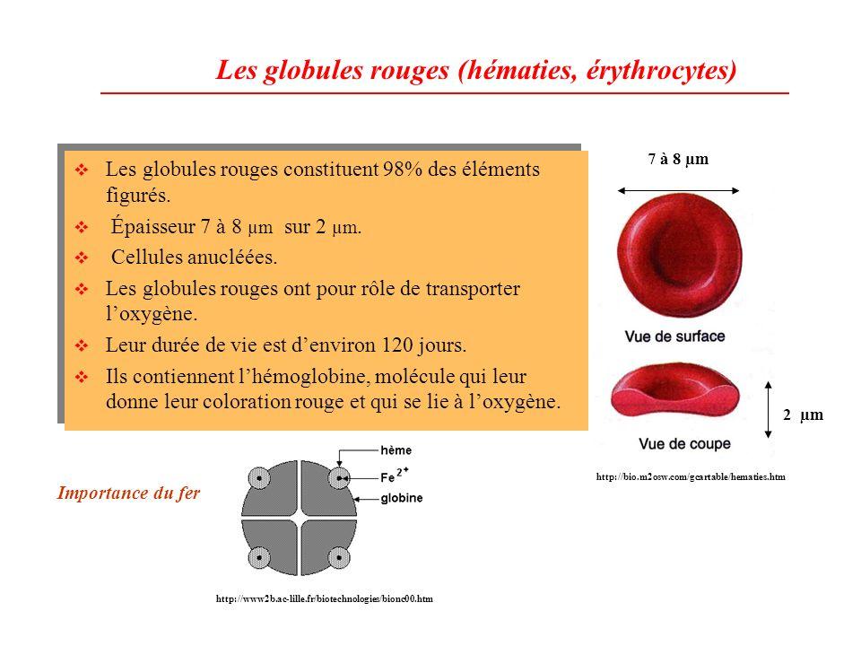 Les globules rouges (hématies, érythrocytes)