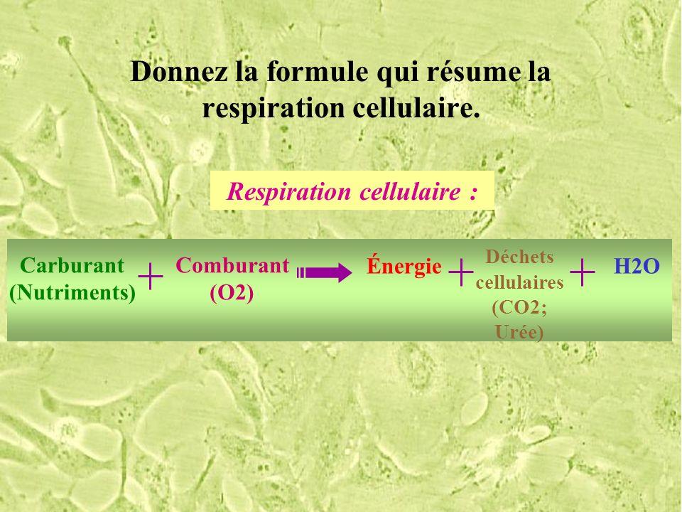 Donnez la formule qui résume la respiration cellulaire.