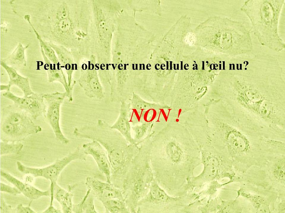 Peut-on observer une cellule à l'œil nu