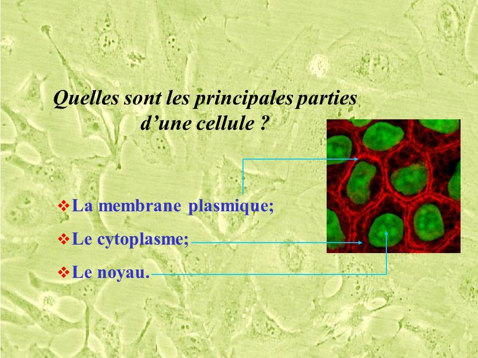Quelles sont les principales parties d'une cellule