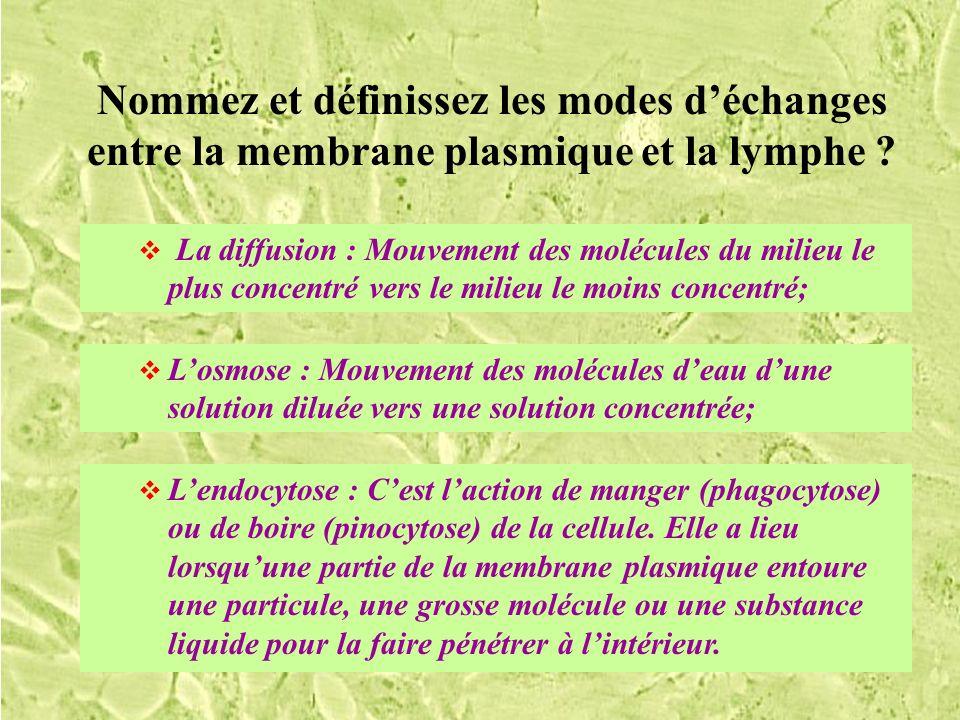 Nommez et définissez les modes d'échanges entre la membrane plasmique et la lymphe
