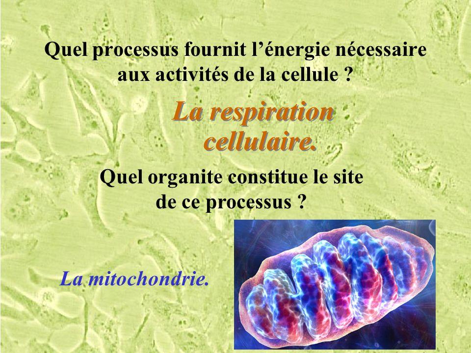 La respiration cellulaire.