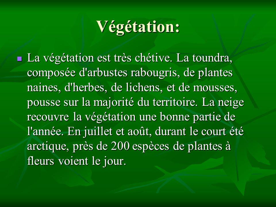 Végétation: