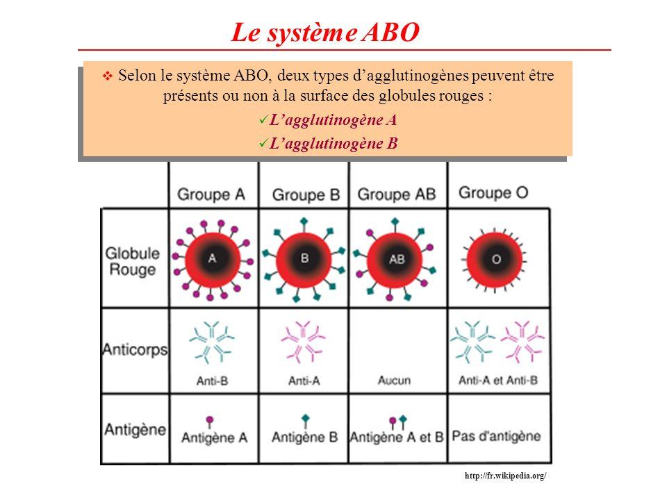 Le système ABO Selon le système ABO, deux types d'agglutinogènes peuvent être présents ou non à la surface des globules rouges :