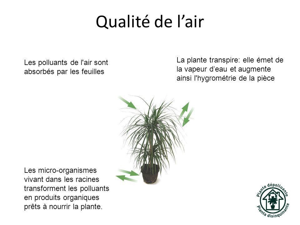 Qualité de l'air La plante transpire: elle émet de la vapeur d'eau et augmente ainsi l hygrométrie de la pièce.
