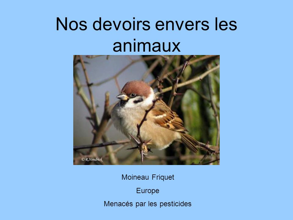 Nos devoirs envers les animaux