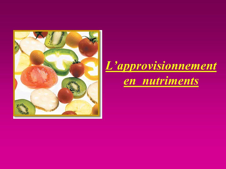 L'approvisionnement en nutriments