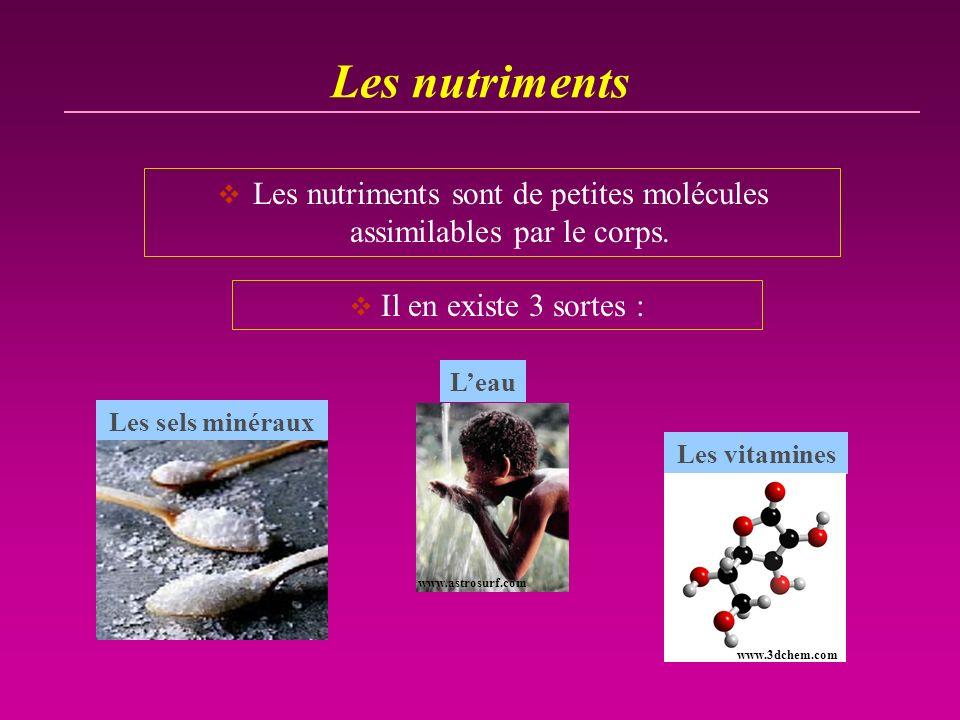 Les nutriments sont de petites molécules assimilables par le corps.