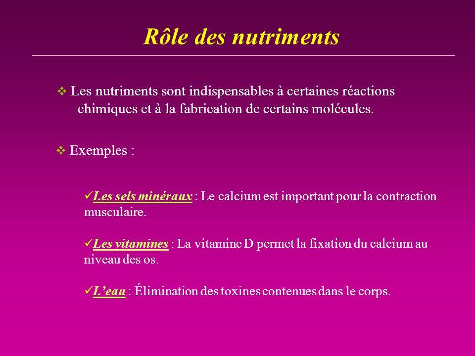 Rôle des nutriments Les nutriments sont indispensables à certaines réactions chimiques et à la fabrication de certains molécules.