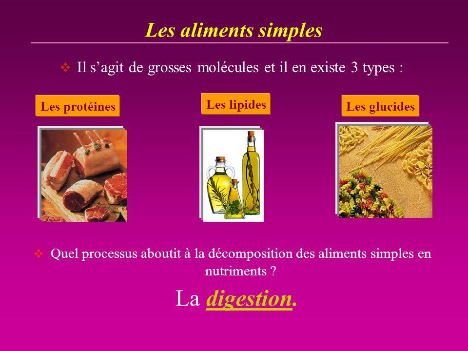 La digestion. Les aliments simples