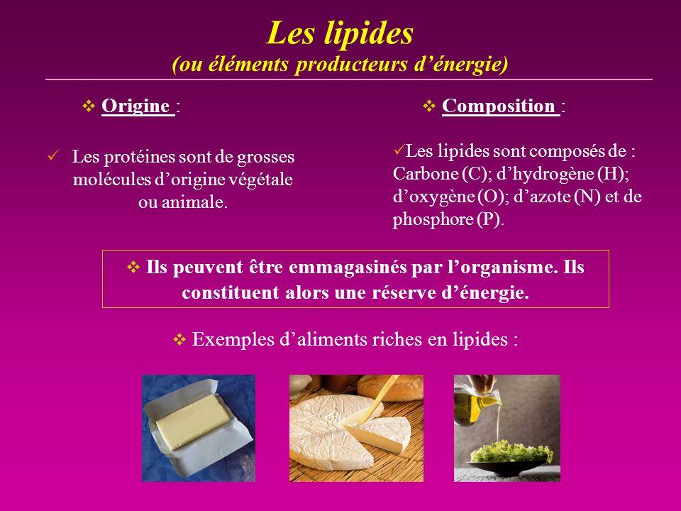 Les lipides (ou éléments producteurs d'énergie) Origine :