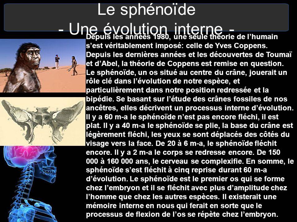 Le sphénoïde - Une évolution interne -