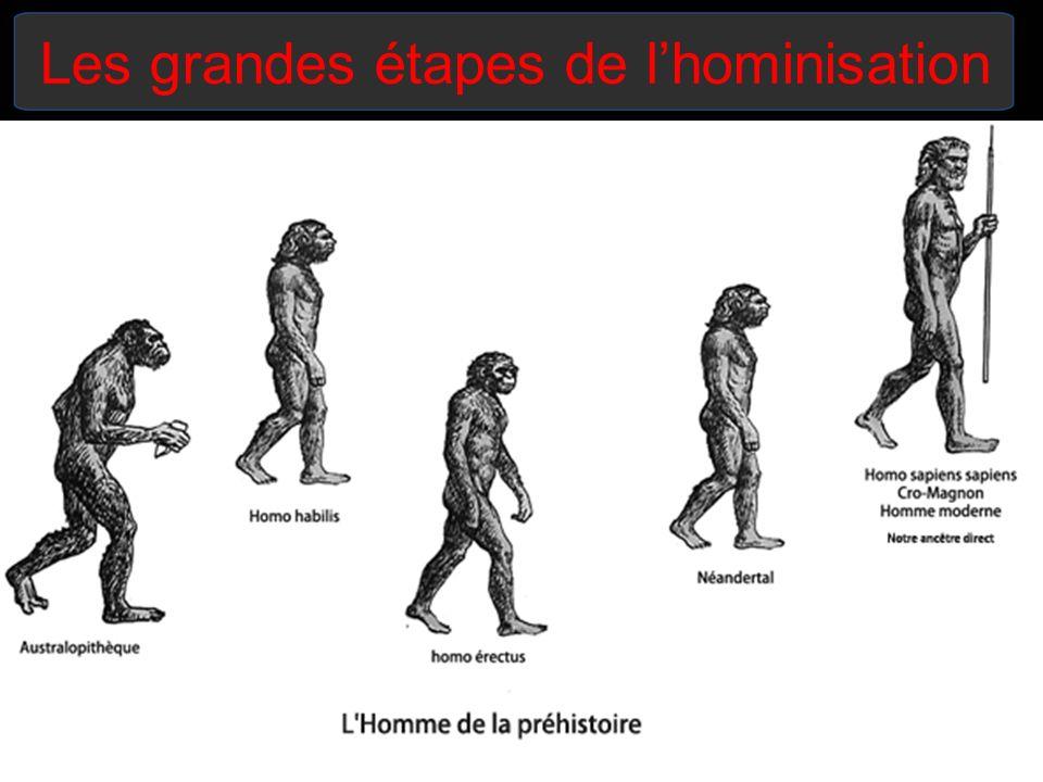 Les grandes étapes de l'hominisation