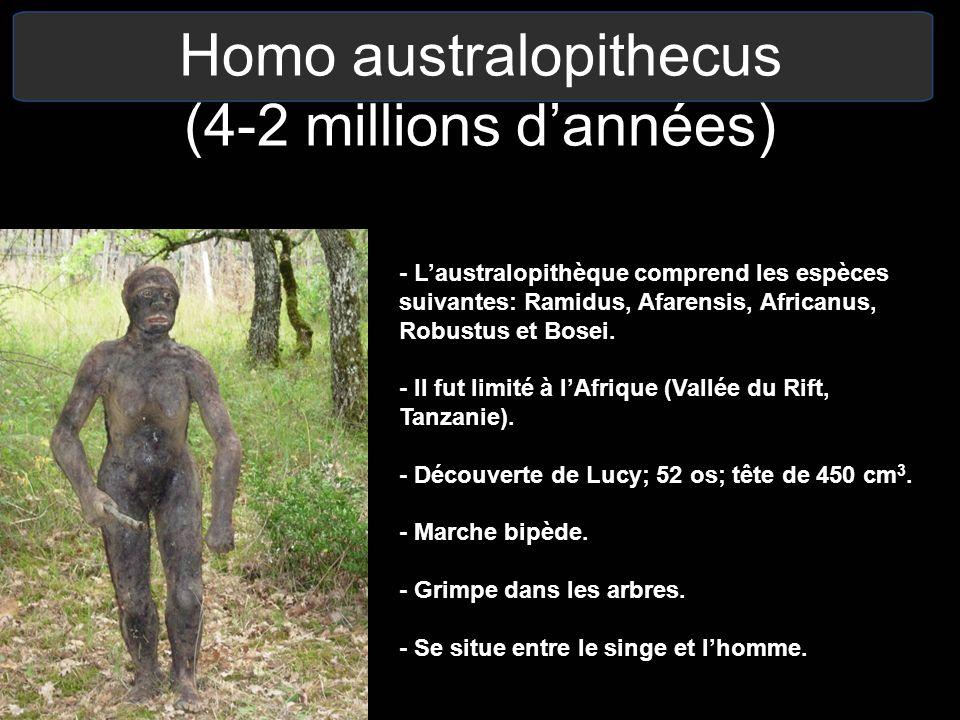 Homo australopithecus (4-2 millions d'années)