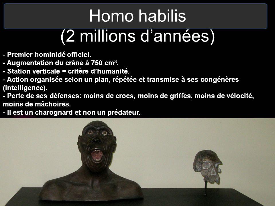 Homo habilis (2 millions d'années)