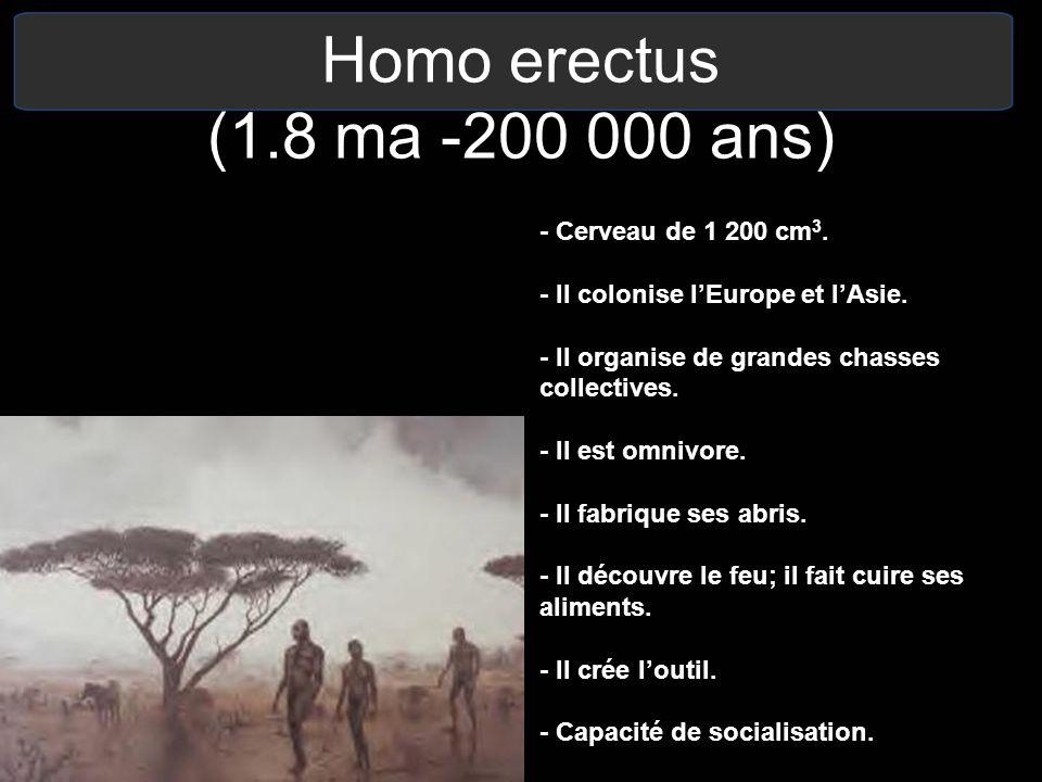 Homo erectus (1.8 ma -200 000 ans) - Cerveau de 1 200 cm3.