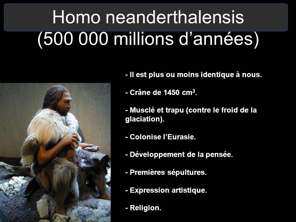 Homo neanderthalensis (500 000 millions d'années)