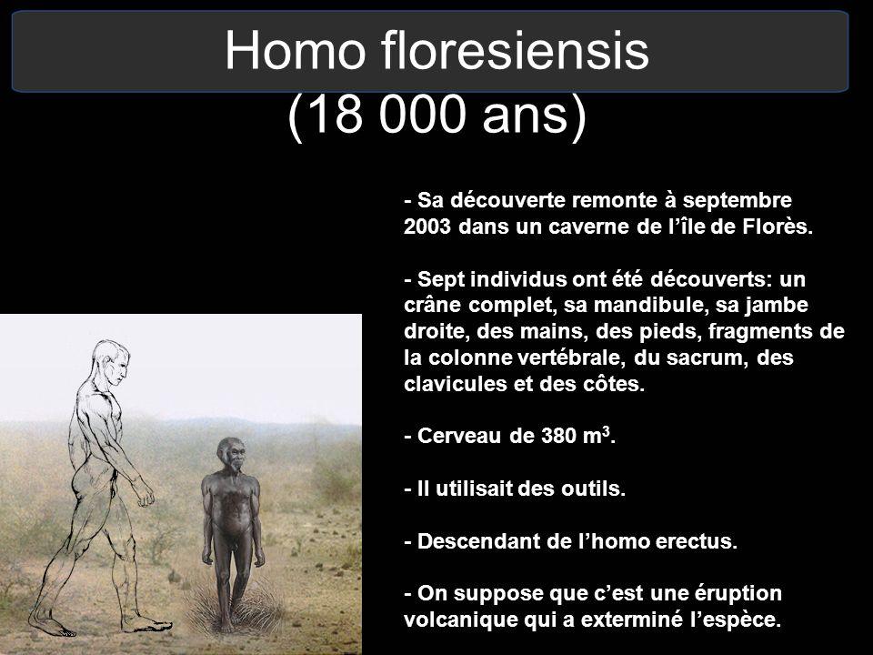 Homo floresiensis (18 000 ans)
